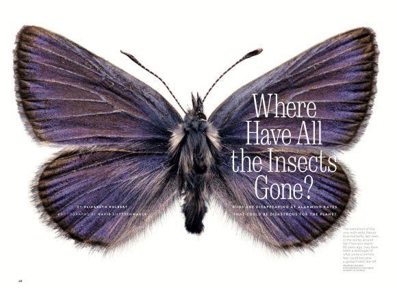 虫はどこへ行った_c0025115_22572708.jpg