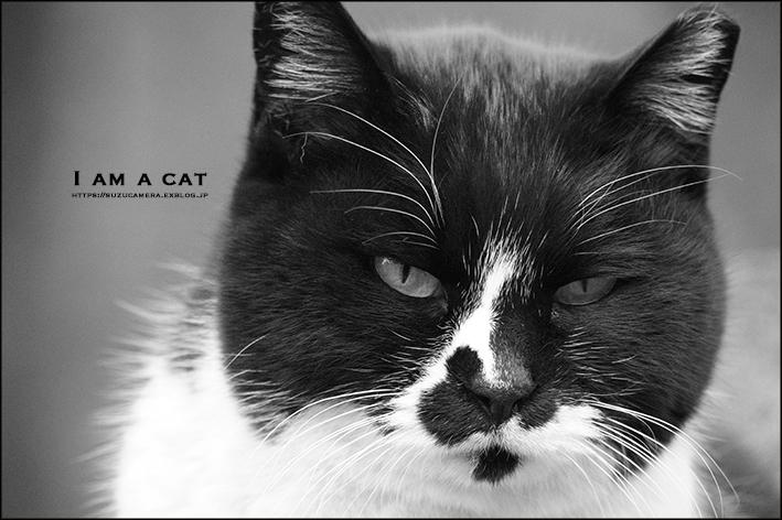 吾輩は猫である_f0100215_21190157.jpg