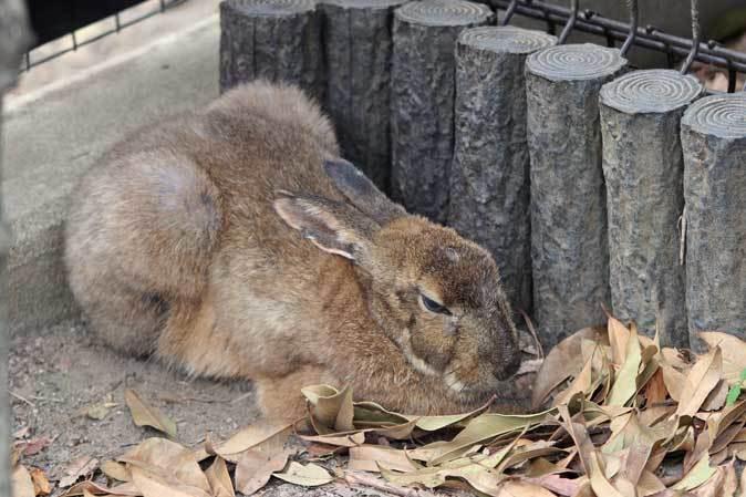タヌキの「ポン」は何故、回る!?(井の頭自然文化園 May 2019)_b0355317_22071330.jpg