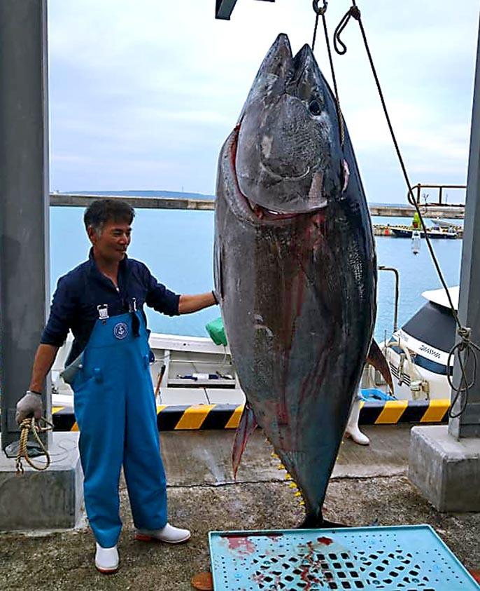 巨大マグロ287kgが揚がる_f0009039_11294587.jpg