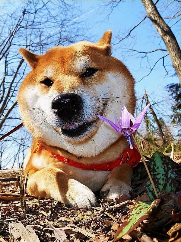 Spring ephemeral_b0314043_08100207.jpg
