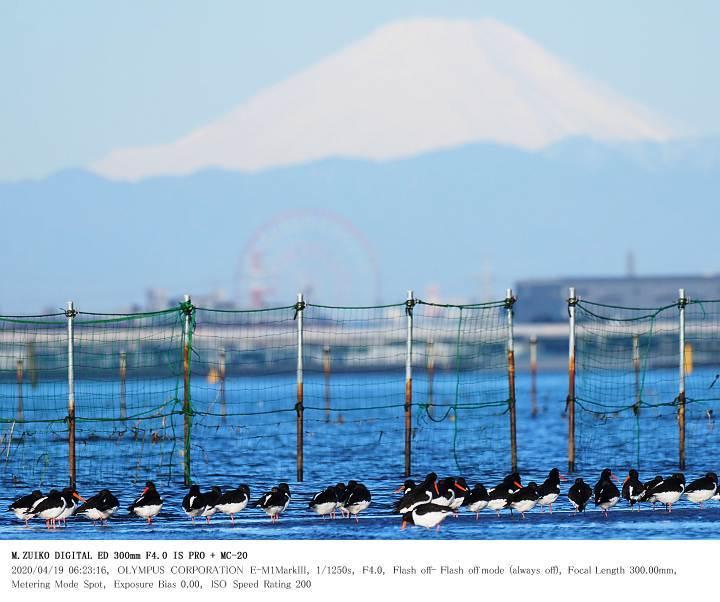ふなばし三番瀬海浜公園 2020.4.19(1)_c0062451_18510415.jpg