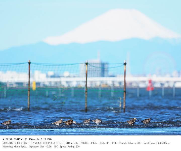 ふなばし三番瀬海浜公園 2020.4.19(1)_c0062451_19035496.jpg