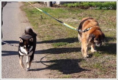わんこの散歩が日課です_a0310054_14264467.jpg
