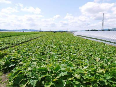 有機栽培の水田ごぼう 令和2年の出荷はGW明けから!栽培方法を変え長期にわたり出荷します!_a0254656_17311009.jpg