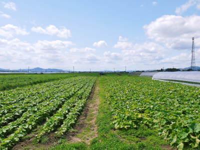 有機栽培の水田ごぼう 令和2年の出荷はGW明けから!栽培方法を変え長期にわたり出荷します!_a0254656_17520426.jpg