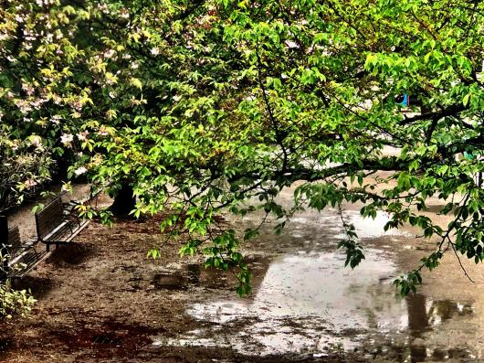 晴れ後雨…マスクの配布始まりました💦_b0181457_11115423.jpg