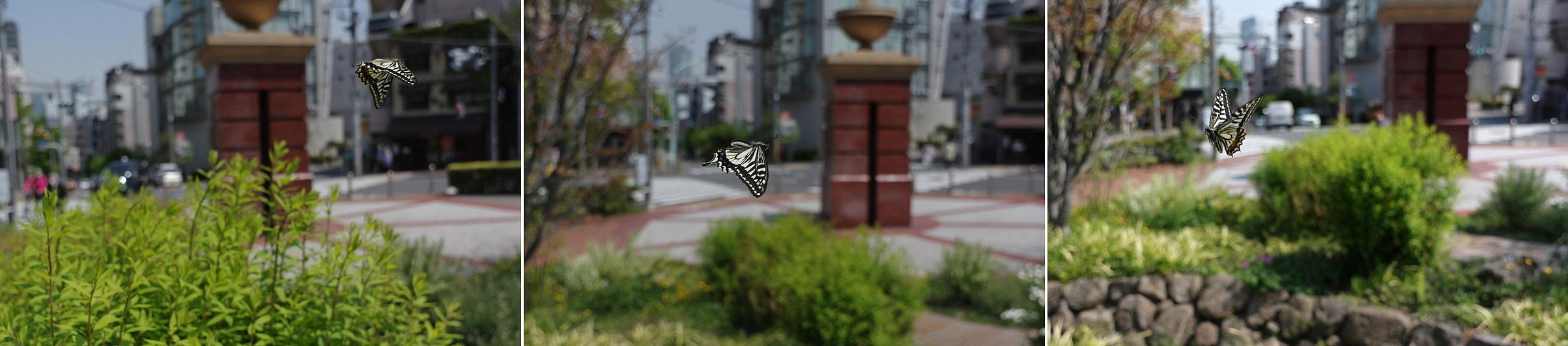 2020.4.14 東京・恵比寿 アゲハ   2020.4.21 (記)_a0181059_11121303.jpg
