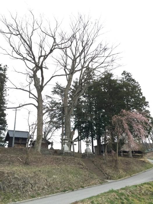 面替区の桜も満開になってきました。_e0091670_13325841.jpeg