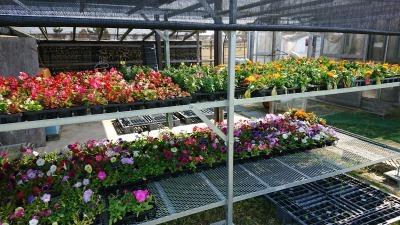 ガーデンふ頭総合案内所前花壇の植替えR2.4.15_d0338682_14404240.jpg