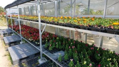 ガーデンふ頭総合案内所前花壇の植替えR2.4.15_d0338682_14405239.jpg