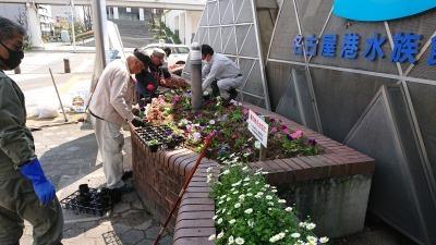 ガーデンふ頭総合案内所前花壇の植替えR2.4.15_d0338682_14423068.jpg