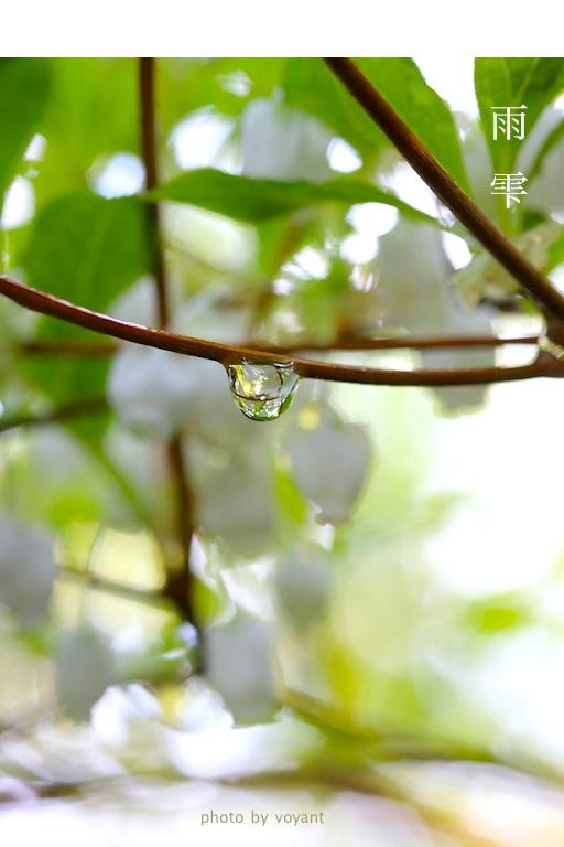 雨雫_d0316986_14523535.jpg