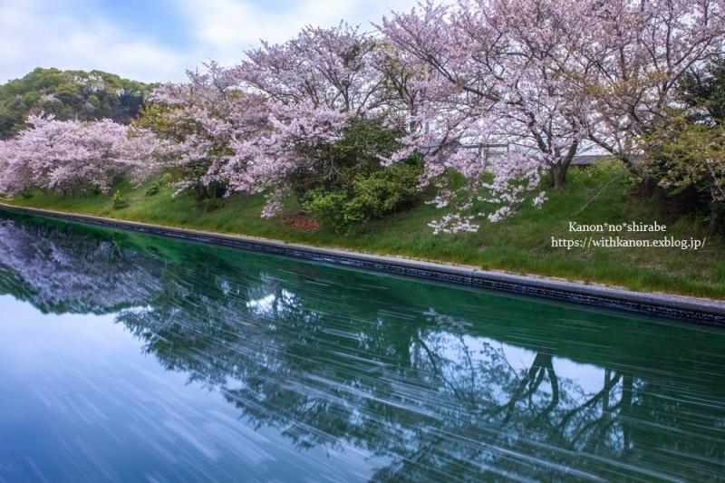 桜並木_d0148187_17034949.jpg