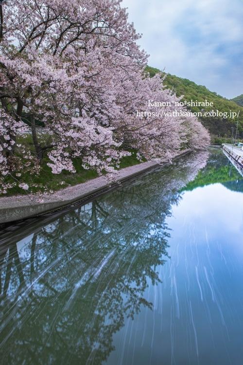 桜並木_d0148187_17035219.jpg