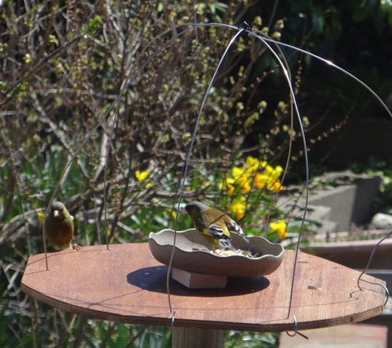 今年もキジバトの季節♪ スズメの餌台を新しくすることなど♪_a0136293_16531972.jpg