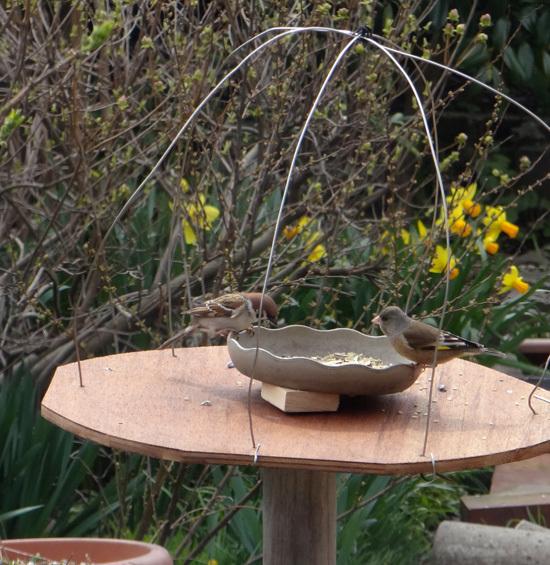今年もキジバトの季節♪ スズメの餌台を新しくすることなど♪_a0136293_17025875.jpg
