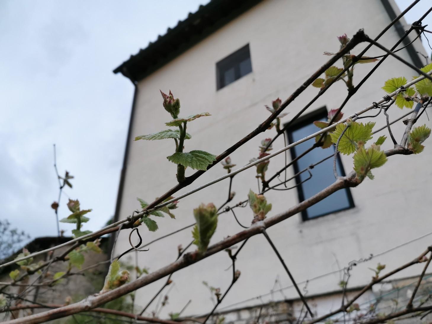 春夏の恒例行事は壁塗り_f0106597_05403717.jpg