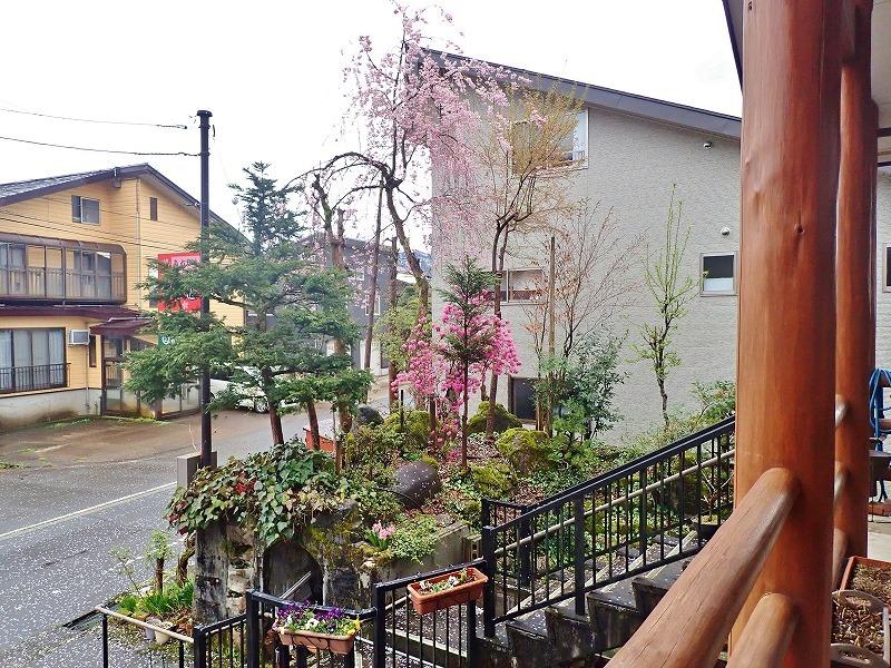 散り始めた桜_c0336902_19154337.jpg