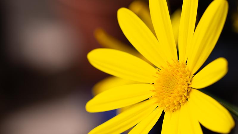 養蜂_a0265606_18341020.jpg