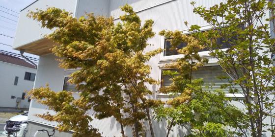お届け物に… 川口市の木の家へ_d0080906_14211057.jpg