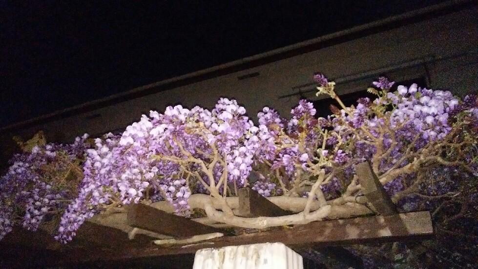 藤の花桜の季節から季..._f0138311_20093985.jpg