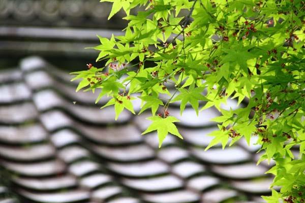 新緑の始まり 常照寺_e0048413_21081377.jpg