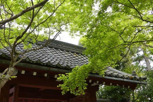 新緑の始まり 常照寺_e0048413_21082282.jpg