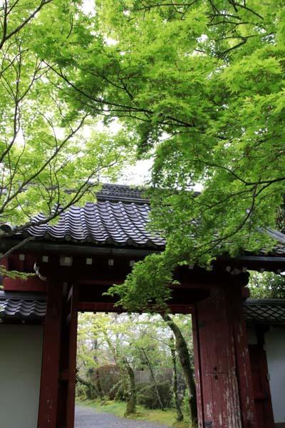 新緑の始まり 常照寺_e0048413_21082848.jpg