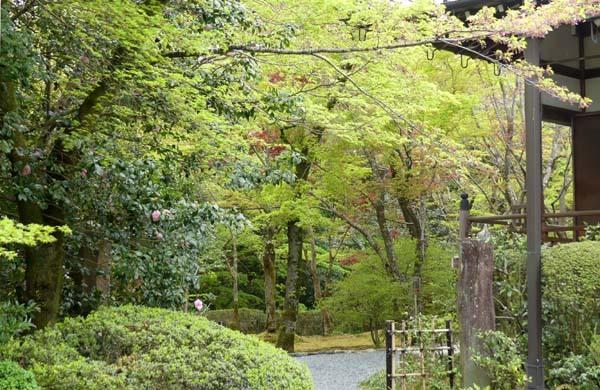 新緑の始まり 常照寺_e0048413_21083215.jpg
