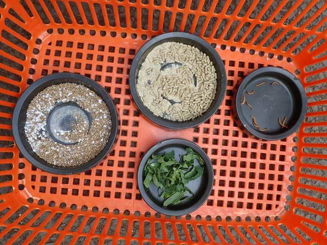 アムールヤマネコのターゲットトレーニングとツミのペリット(井の頭自然文化園 May 2019)_b0355317_21525476.jpg