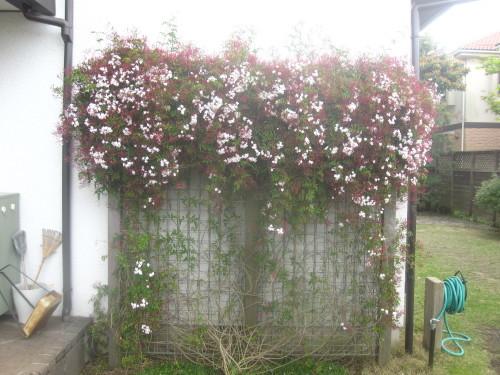 静かな春_e0350927_11592441.jpg