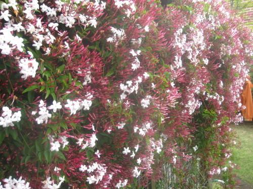静かな春_e0350927_11594242.jpg