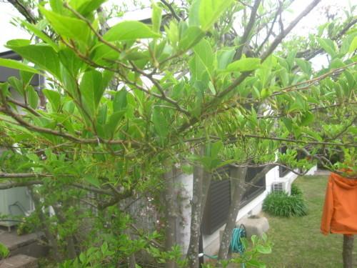 静かな春_e0350927_12013546.jpg