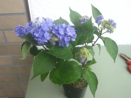 静かな春_e0350927_12015491.jpg