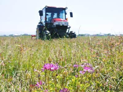 れんげを肥料に使い無農薬栽培の「七城町砂田のこだわりれんげ米」残りわずか!れんげの花咲く様子(2020)_a0254656_17535213.jpg
