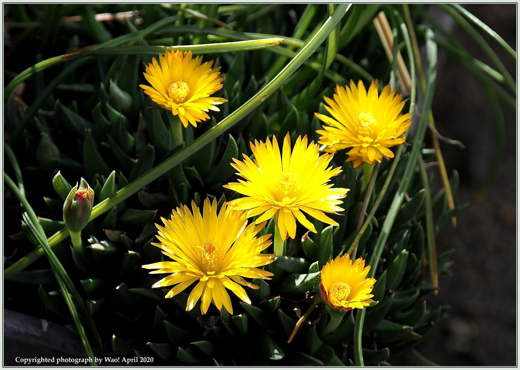 庭の花-6_c0198669_21481726.jpg
