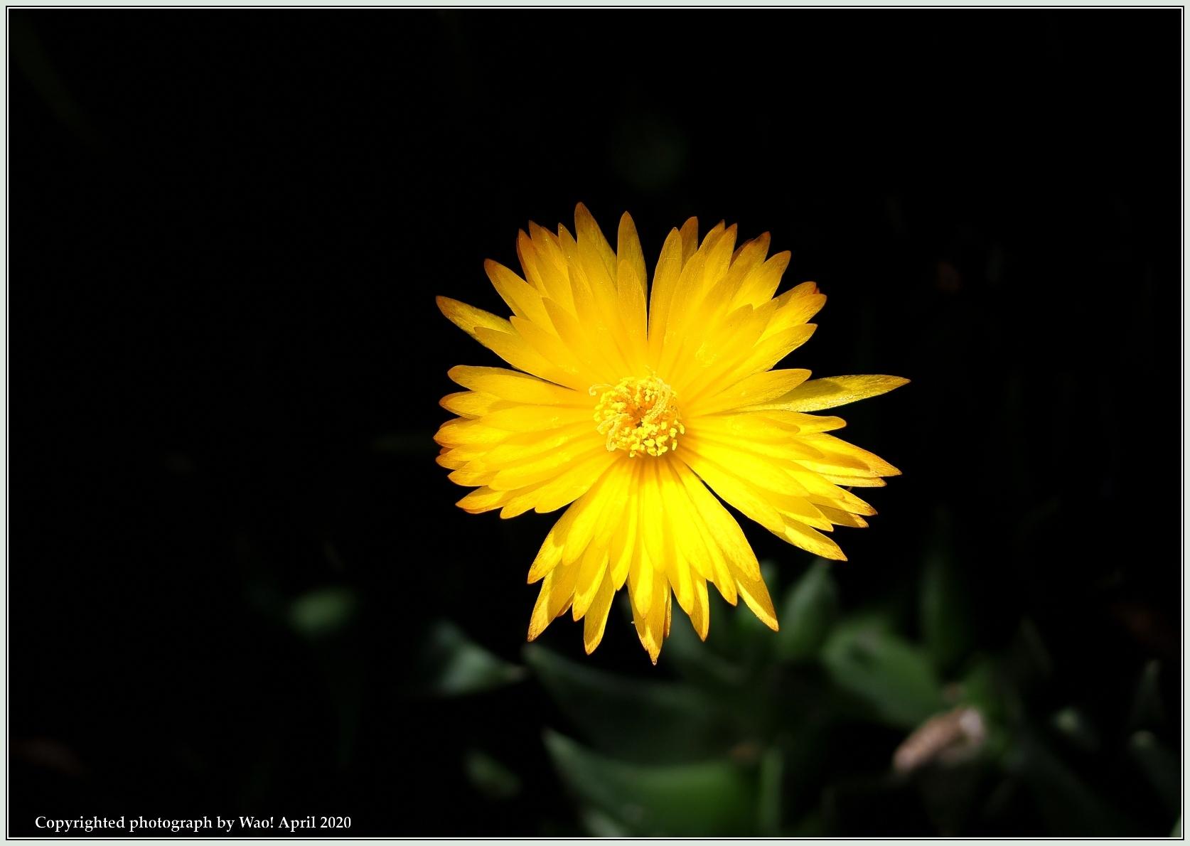庭の花-6_c0198669_21482153.jpg