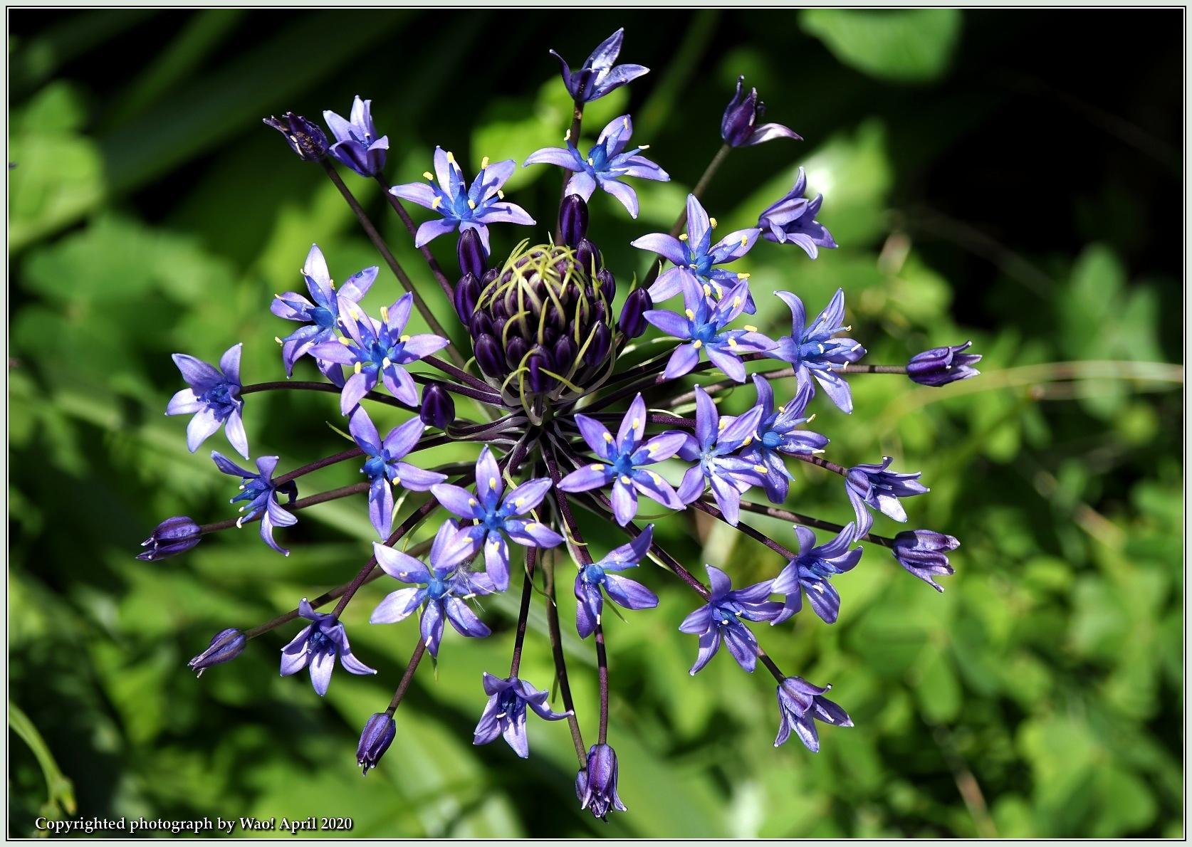 庭の花-6_c0198669_21484507.jpg