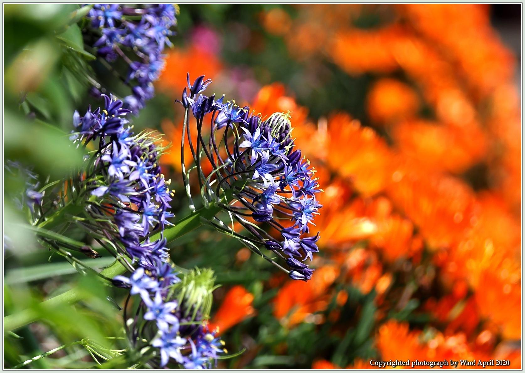 庭の花-6_c0198669_21485248.jpg