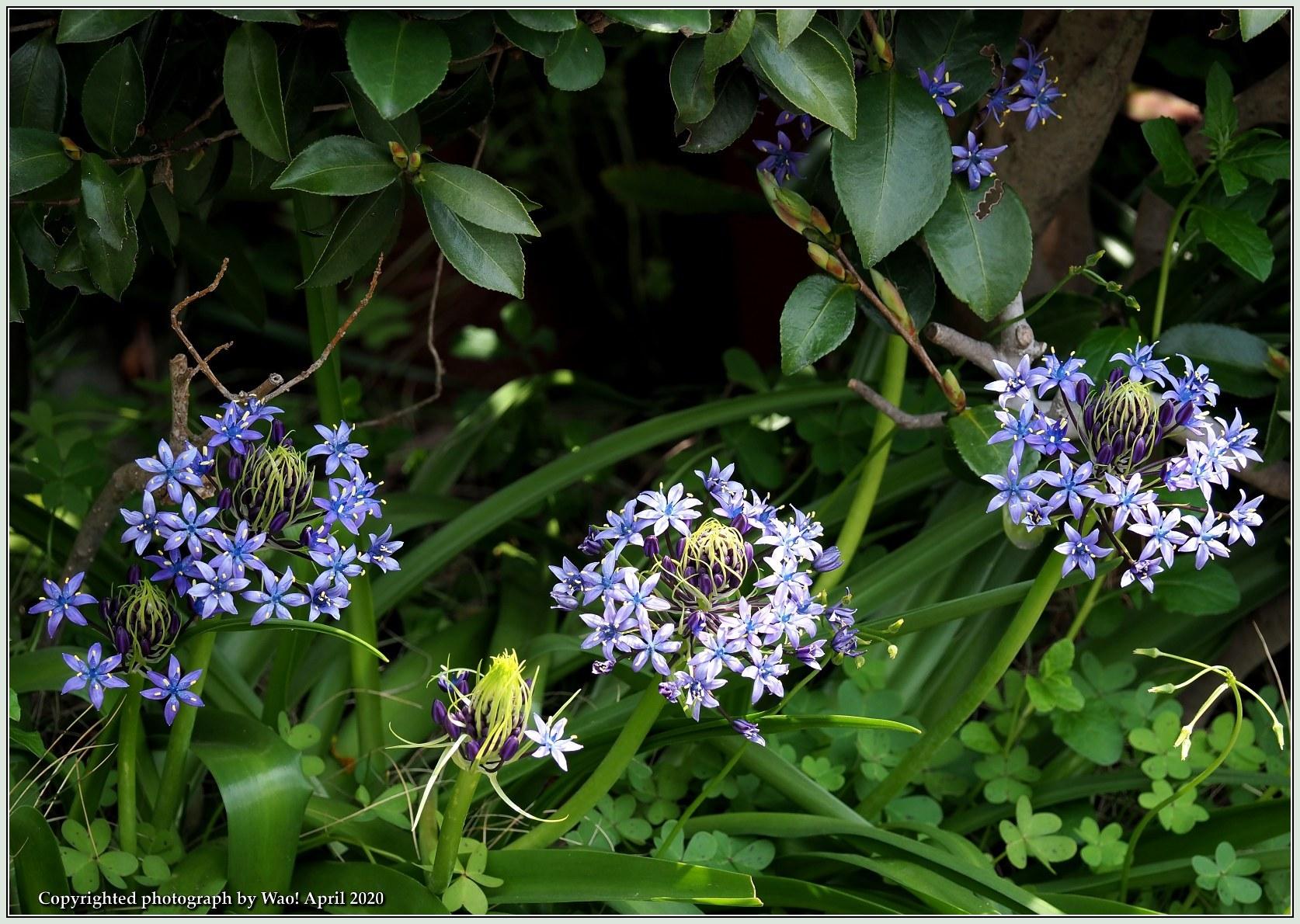 庭の花-6_c0198669_21485930.jpg