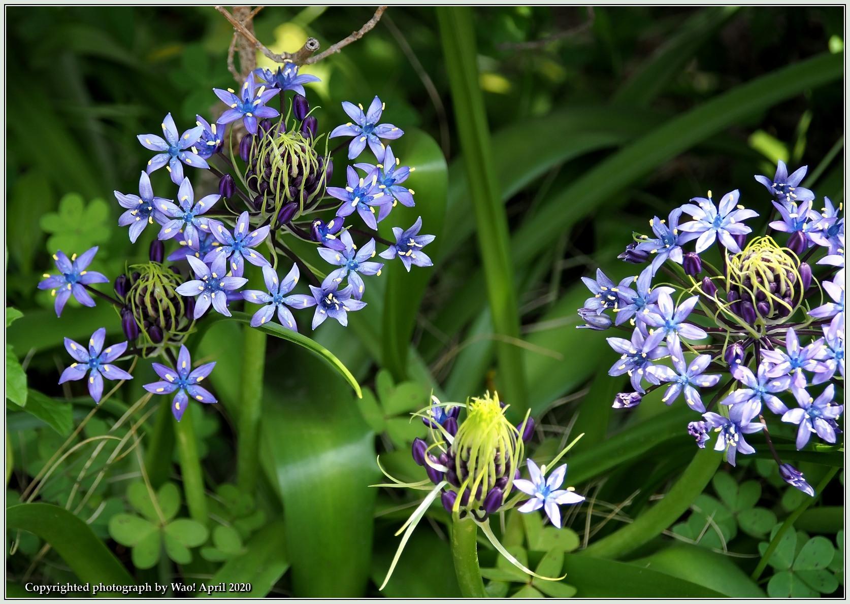 庭の花-6_c0198669_21490489.jpg
