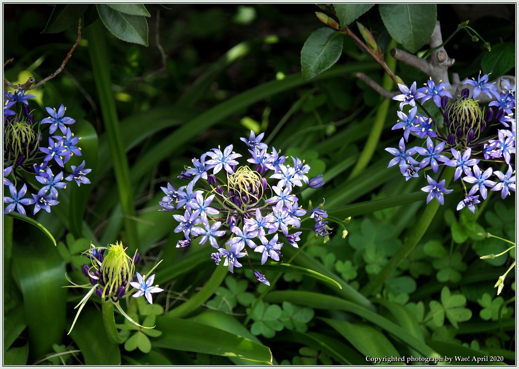 庭の花-6_c0198669_21490882.jpg