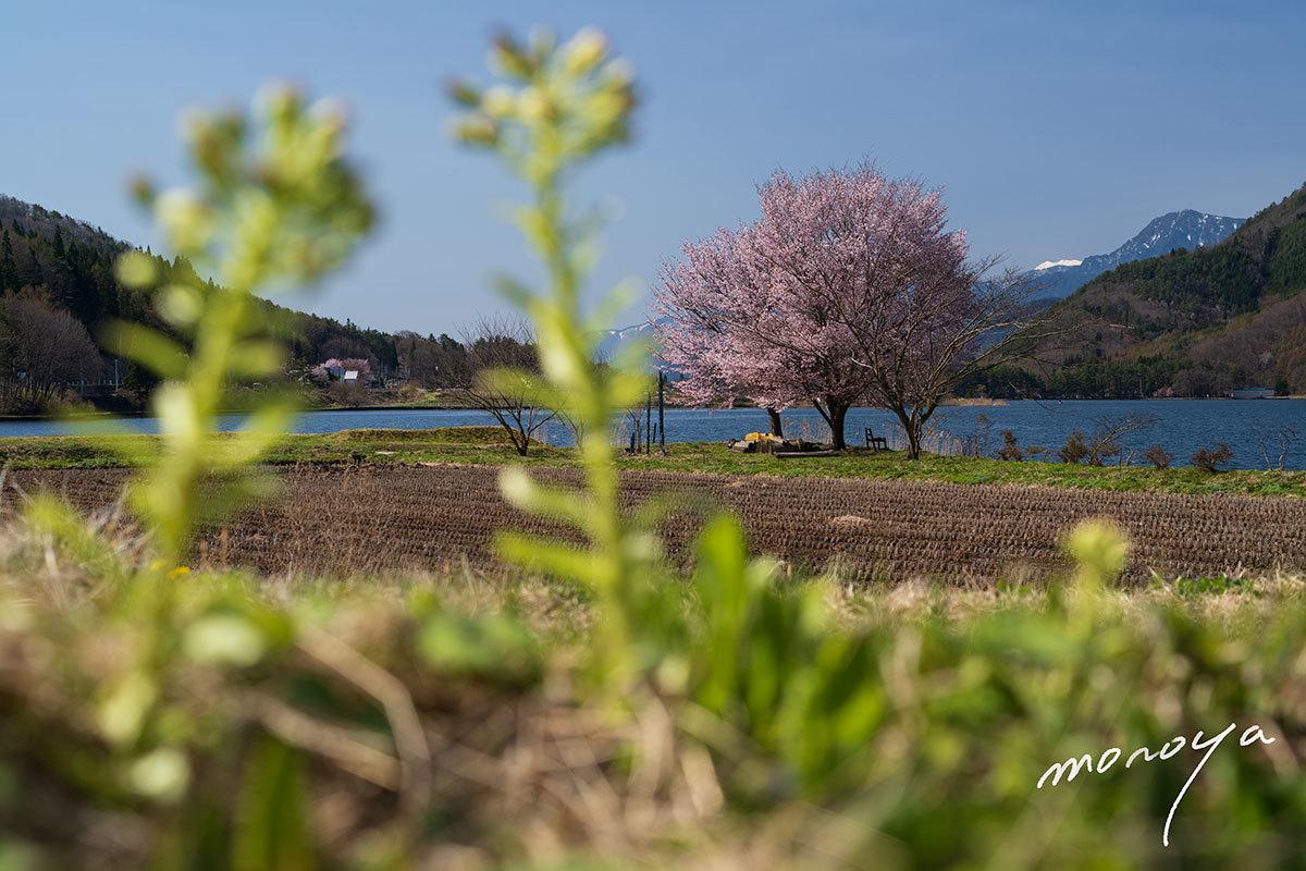 湖畔の春_c0085877_05554958.jpg