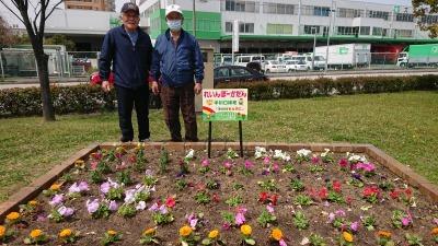 中川口緑地れいんぼーかだんの植替えR2.4.15_d0338682_14160304.jpg