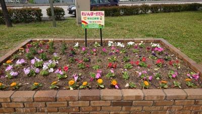 中川口緑地れいんぼーかだんの植替えR2.4.15_d0338682_14272214.jpg