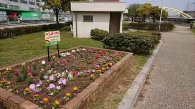 中川口緑地れいんぼーかだんの植替えR2.4.15_d0338682_14273482.jpg