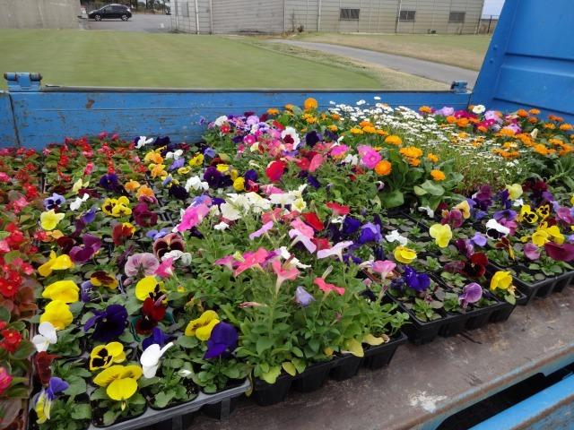南陽学区さんに花鉢の販売を行いました!R2.3.28_d0338682_15565682.jpg