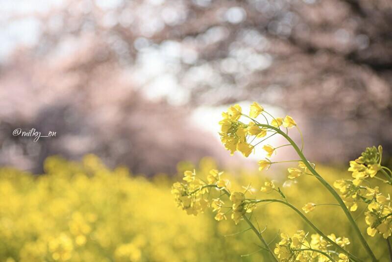 春_d0177586_14380204.jpg