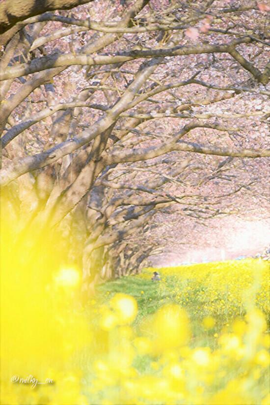 春_d0177586_14401848.jpg